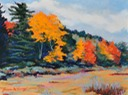 Blazing Color at Black Moshannon